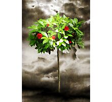 Rose Tree Red Photographic Print