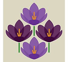 Crocus Flower Photographic Print