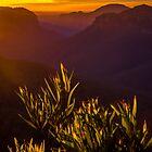 Grose valley by Delightfuldave