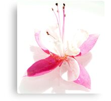 High Key Fuchsia Canvas Print