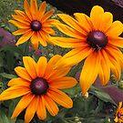 Sunny Susans by Monnie Ryan
