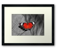 Bright Red Butterfly Framed Print