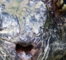Common Snapping Turtle Close Up Sticker