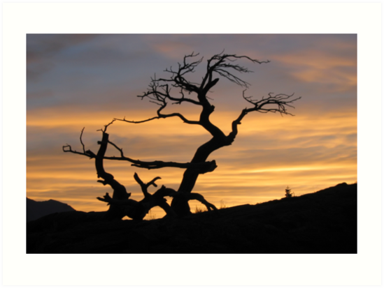 Sunset at the Burmis Tree by Vickie Emms