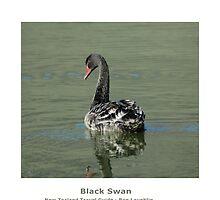 Black Swan of New Zealand by ronlaughlin