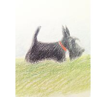 Scottie – pencil sketch Photographic Print