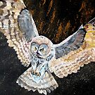 Swooping owl by cathyjacobs