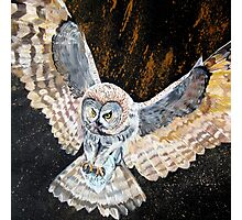 Swooping owl Photographic Print