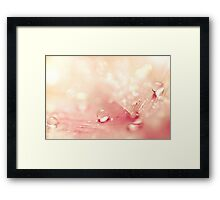 Peach Drops  Framed Print