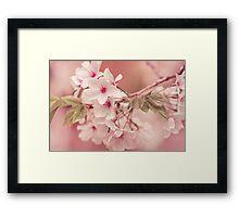 Apple Tree Blossoms Framed Print