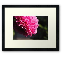 Macro-Flower-2 Framed Print