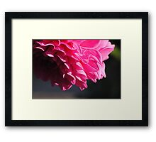 Macro-Flower-3 Framed Print