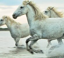 Camargue Mares side view by Helkoryo