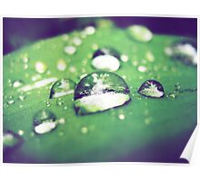 Green leaf waterdrop reflection macro photography Poster
