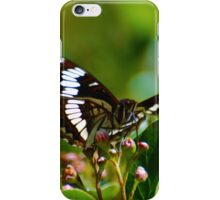 Lorquin Admiral Butterfly iPhone Case/Skin