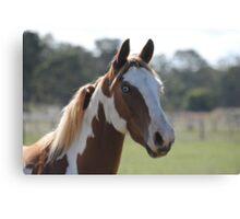 Moe- The Horse Canvas Print