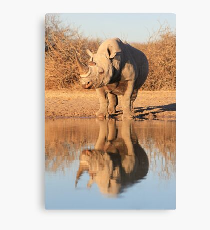 Black Rhino - Reflection of Power - African Wildlife  Canvas Print