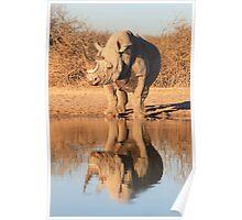 Black Rhino - Reflection of Power - African Wildlife  Poster