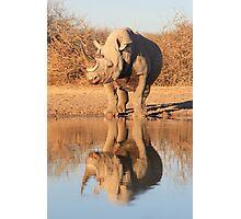 Black Rhino - Reflection of Power - African Wildlife  Photographic Print