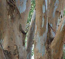 Gumtree limbs by ndarby1