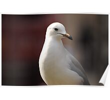 Busy Melbourne City Life As A Seagull  Poster