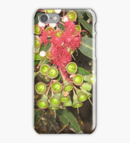 Eucalyptus Flowers and pods iPhone Case/Skin