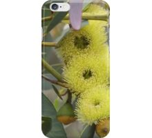 Bell-fruited Mallee Tree iPhone Case/Skin