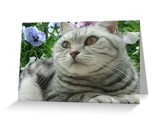 British Shorthair - Relaxing in the sun Greeting Card