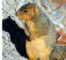American Red Squirrel by kimberpix