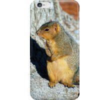 American Red Squirrel iPhone Case/Skin