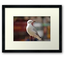 Seagull Looking down Framed Print