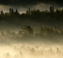 28.6.2014: Summer Morning in Torronsuo National Park II by Petri Volanen