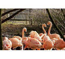 The Flamingo Heart Photographic Print