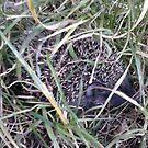 Good morning Mr. Hedgehog! by Kagara