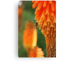 hoverfly in blossom Canvas Print