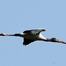 wood stork by Dennis Cheeseman