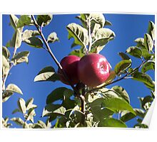 Red Apples On The Tree Poster