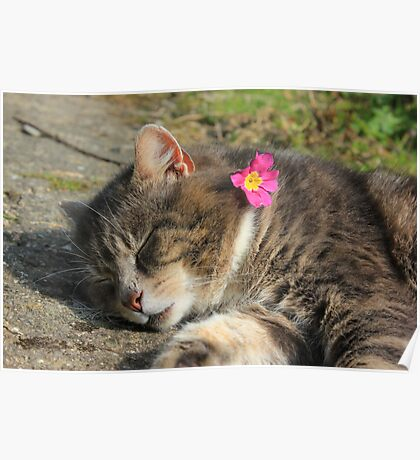 Sleeping cat with primrose Poster