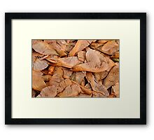 Fall Has Arrived Framed Print