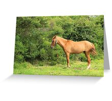 Horse Next to Trees Greeting Card