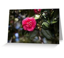 Japanese Camellia Greeting Card