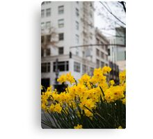Portland Daffodils Canvas Print