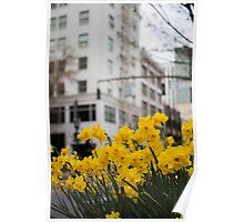 Portland Daffodils Poster