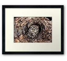 Little owl at home Framed Print