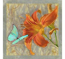 Afternoon in Tuscany II orange day lily aqua butterfly Photographic Print