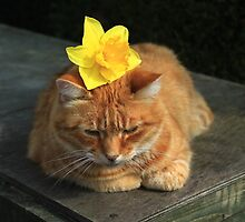 Ginger cat playing with daffodil by turniptowers