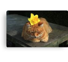 Ginger cat playing with daffodil Canvas Print