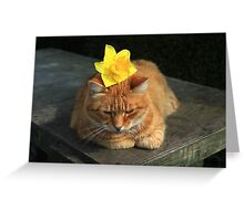 Ginger cat playing with daffodil Greeting Card