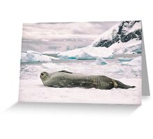 Smiling Weddell Seal - Antarctica Greeting Card