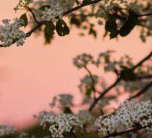 Spring Nights Sticker